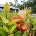1º Flores e Frutos