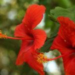 3º Flores e Frutos